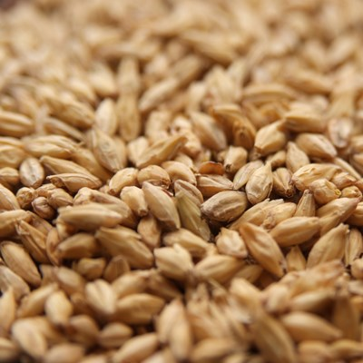 2Row Brewer's Malt, Briess LB